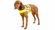Hunde-Signalwesten