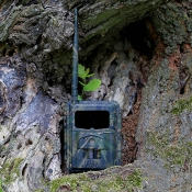Seissiger - Special-Cam 2G/GPRS - 12MP - Funk-Wildkamera