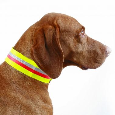 Hunde-Signalhalsung - Klettband - 5cm