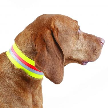 Hunde-Signalhalsung - Dehnband - 5cm 34cm
