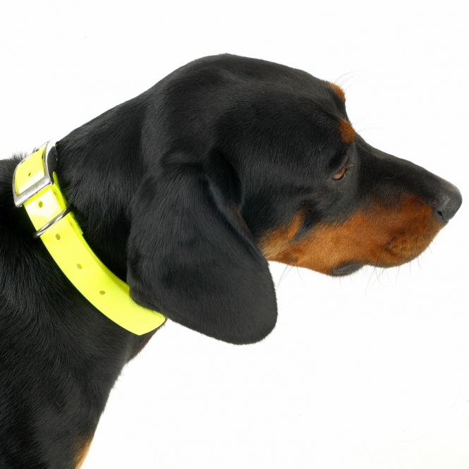 Biothane Gold - Signal-Halsband - gelb 38mm/70cm