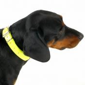 Biothane Gold - Signal-Halsband - gelb 25mm/60cm