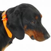 Biothane Gold - Signal-Halsband - orange 25mm / Länge: 60cm