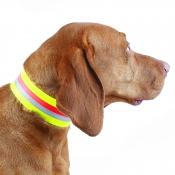 Hunde-Signalhalsung - Dehnband - 5cm