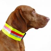 Hunde-Signal-Halsung - Dehnband - 7cm