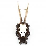 Gehörnbrett - Rehbock - Eiche - Typ 4 Dunkelbraun - groß