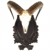 Gehörnbrett - Muffel - Linde - Typ 2