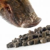 Sauenlockmittel - Heilbutt Pellets - 20kg Sack
