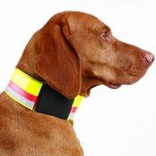 Hunde-Signal-Halsung - Kombi - 6cm