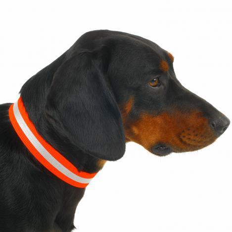 Hunde - Signalhalsung - Klettverschluss
